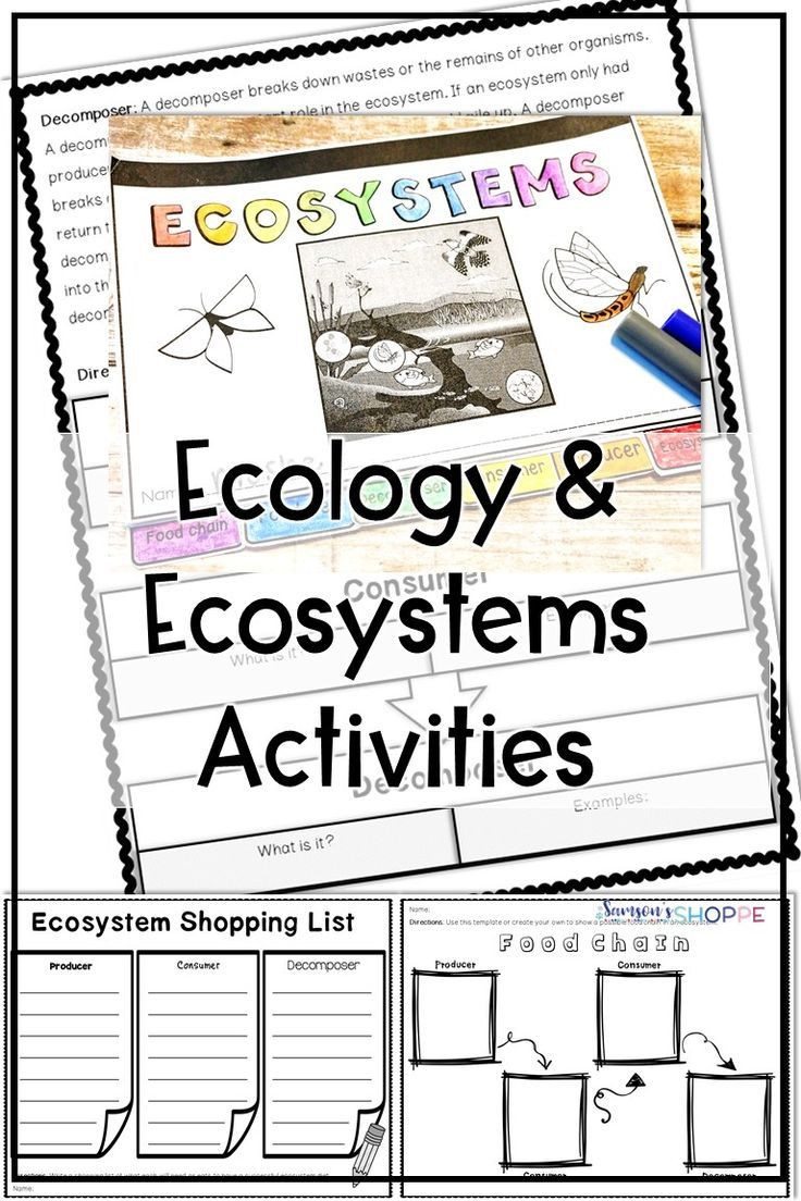 3rd Grade Ecosystem Worksheets Ecology and Ecosystem Reading and Activity