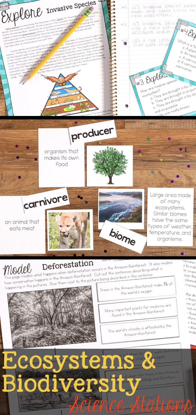 3rd Grade Ecosystem Worksheets Ecosystems and Biodiversity Third Grade Science Stations