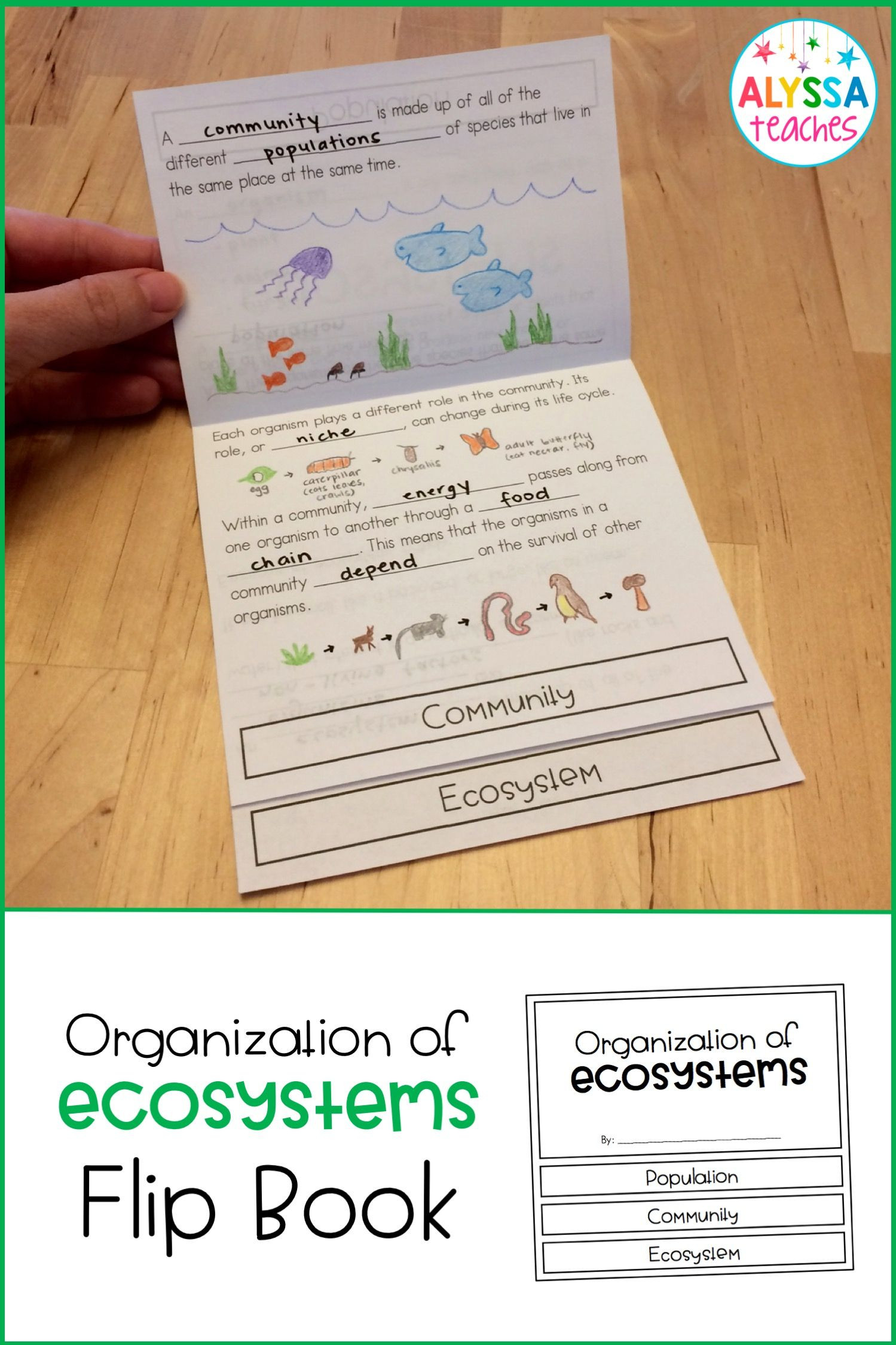 3rd Grade Ecosystem Worksheets Plant and Animal Adaptations Flip Book