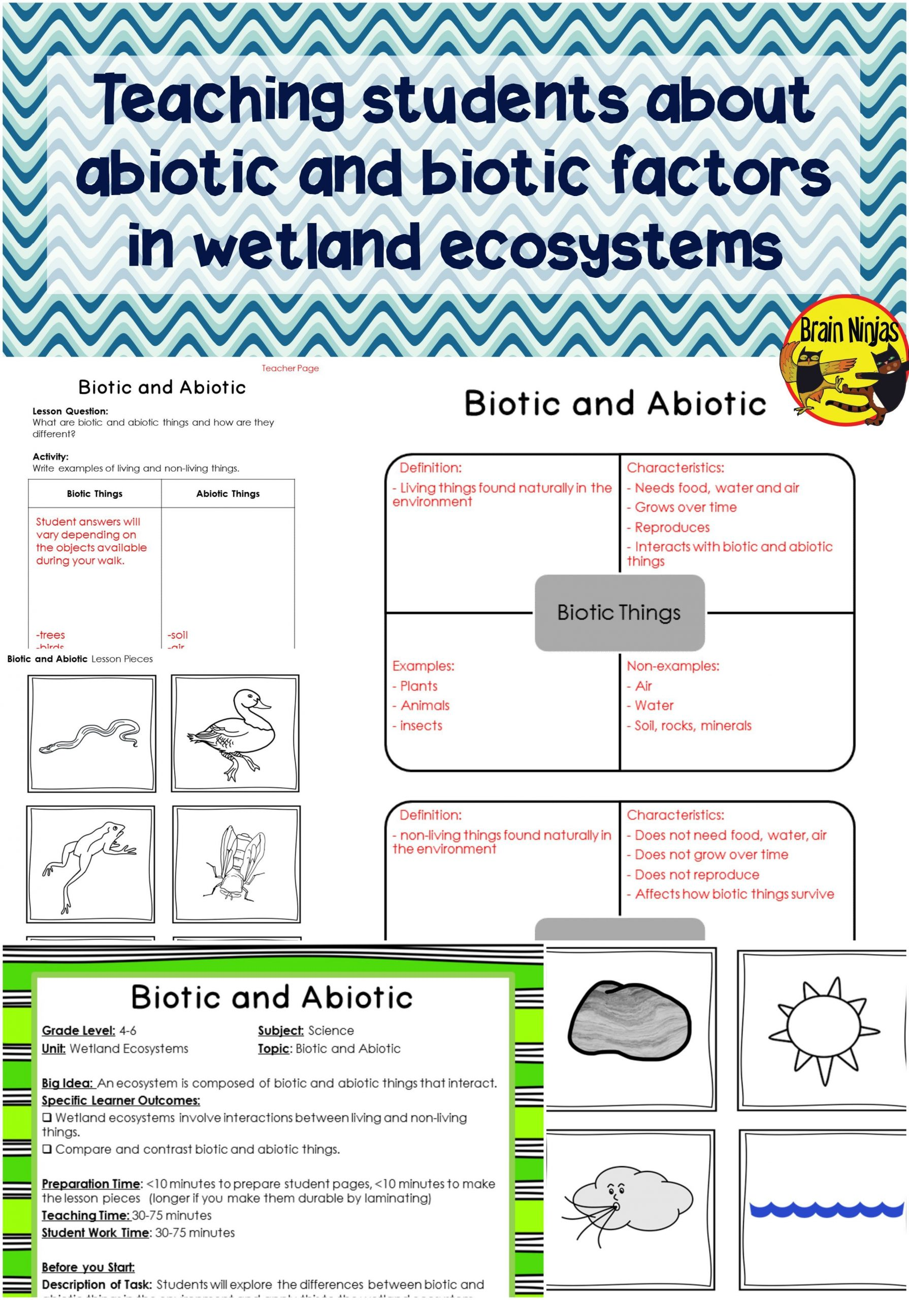 3rd Grade Ecosystem Worksheets Water Ecosystems Worksheet
