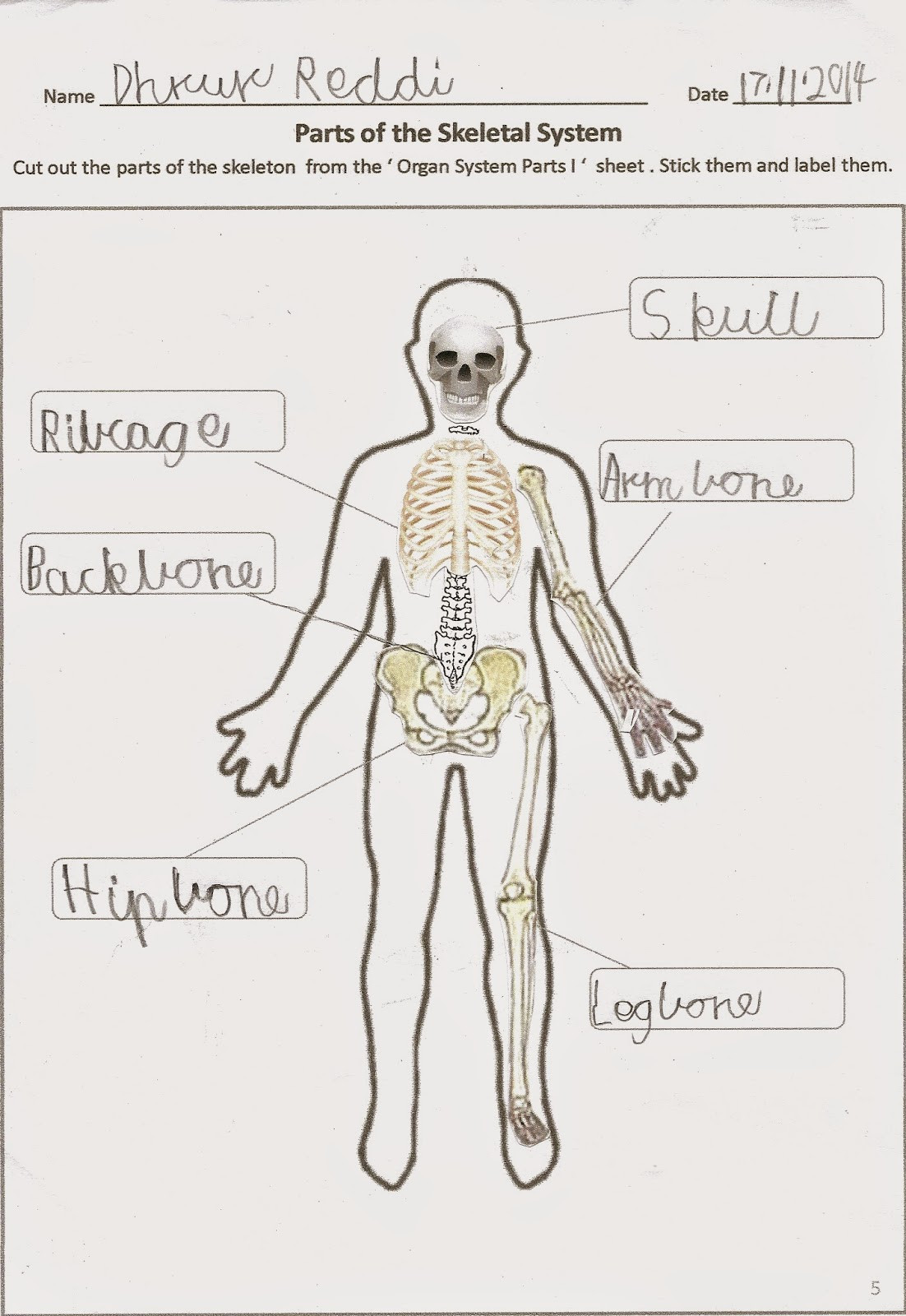 3rd Grade Human Body Worksheets Happy Learners Human Body organ Systems