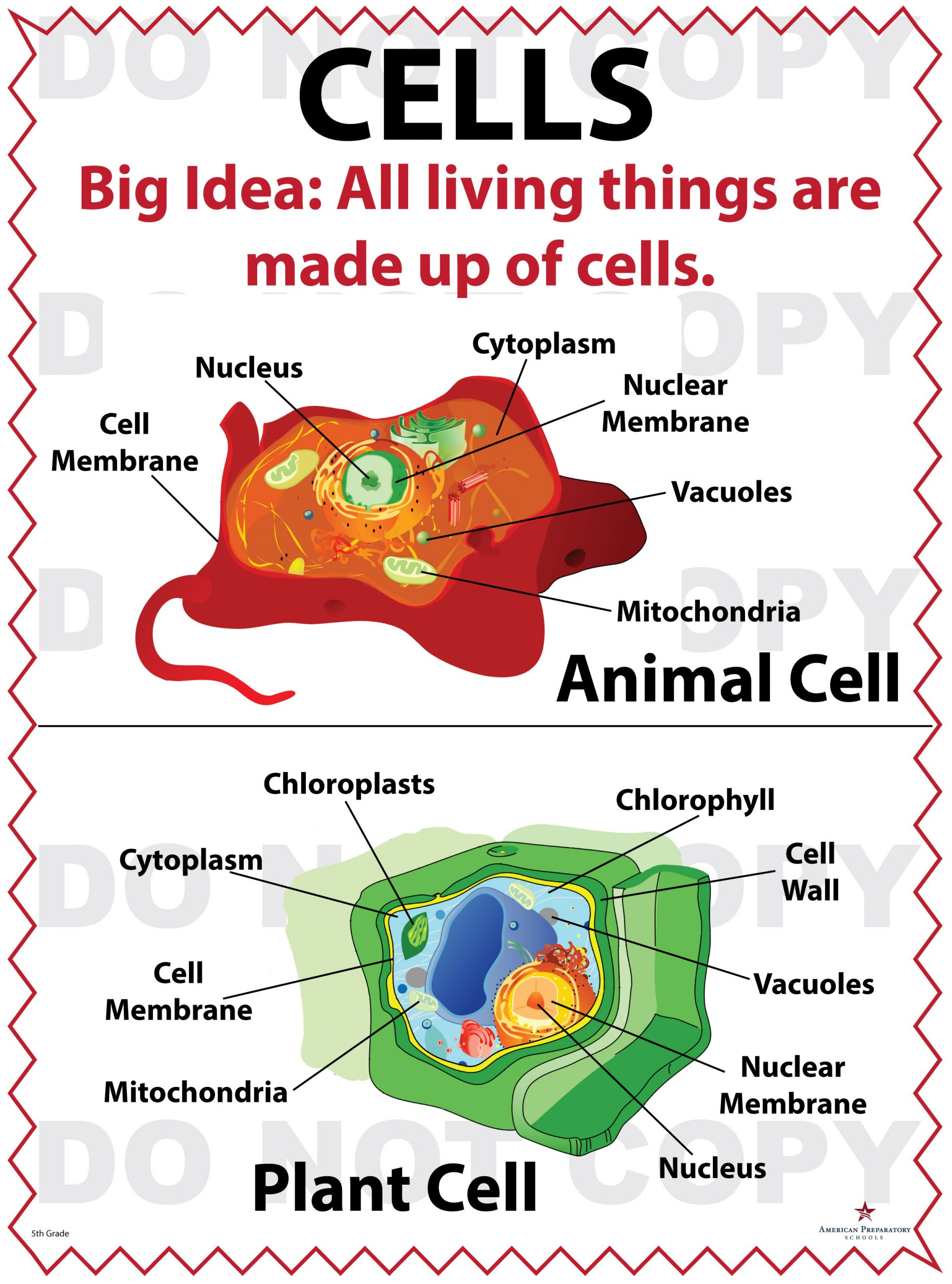 5th Grade Cell Worksheets Label A Cell Model Worksheet