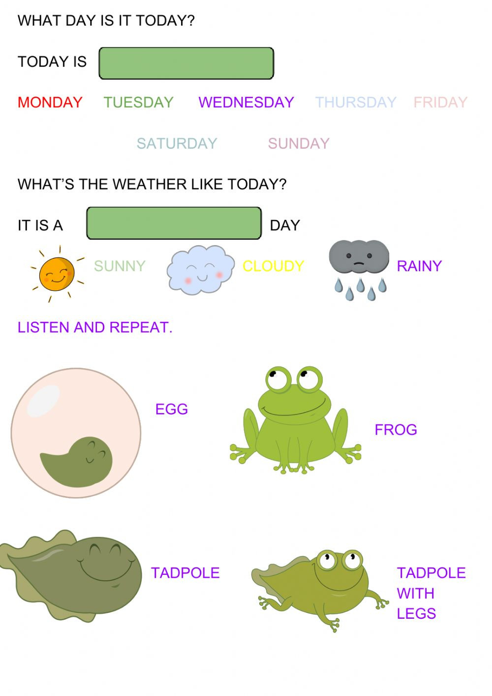 Amphibian Worksheets for Second Grade Frog Life Cycle Interactive Worksheet