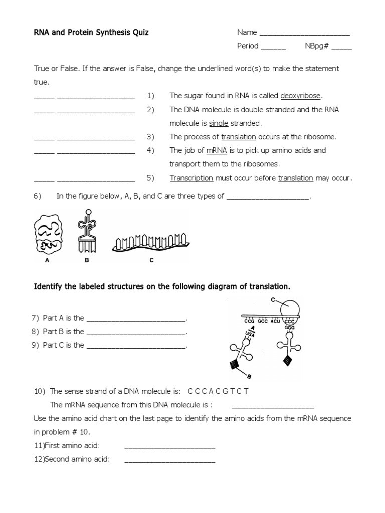 Dna Worksheet Middle School Pdf Rna and Protein Synthesis Quiz Translation Biology