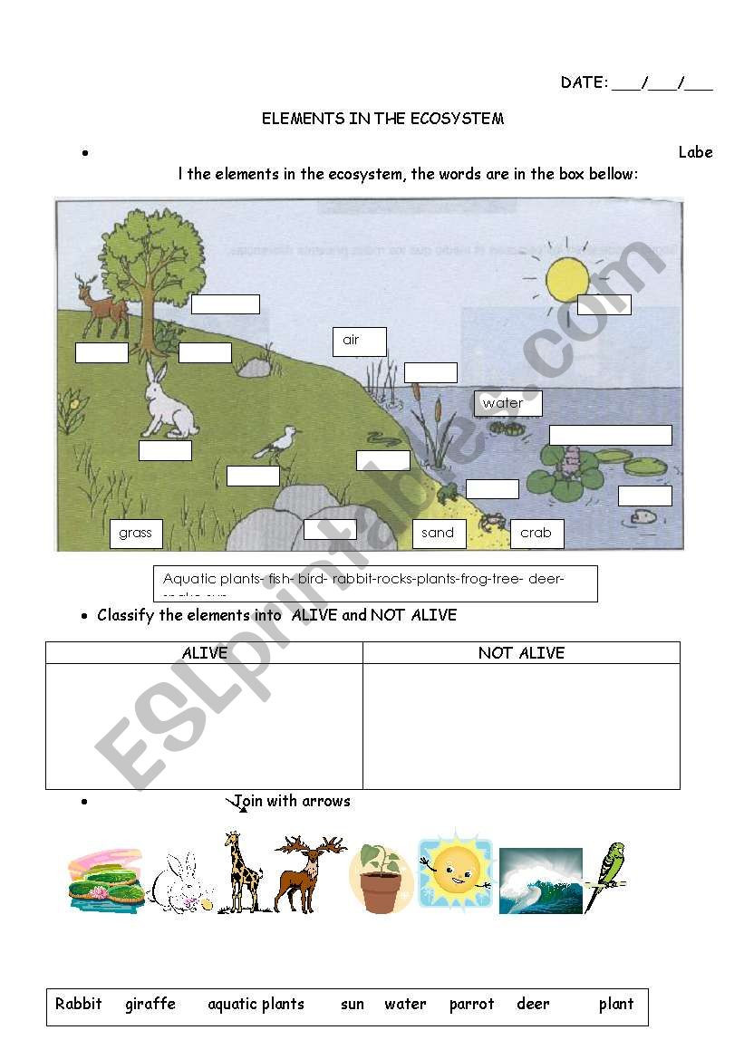 Ecosystem Worksheets 4th Grade Elements In the Ecosystem Esl Worksheet by Carucha