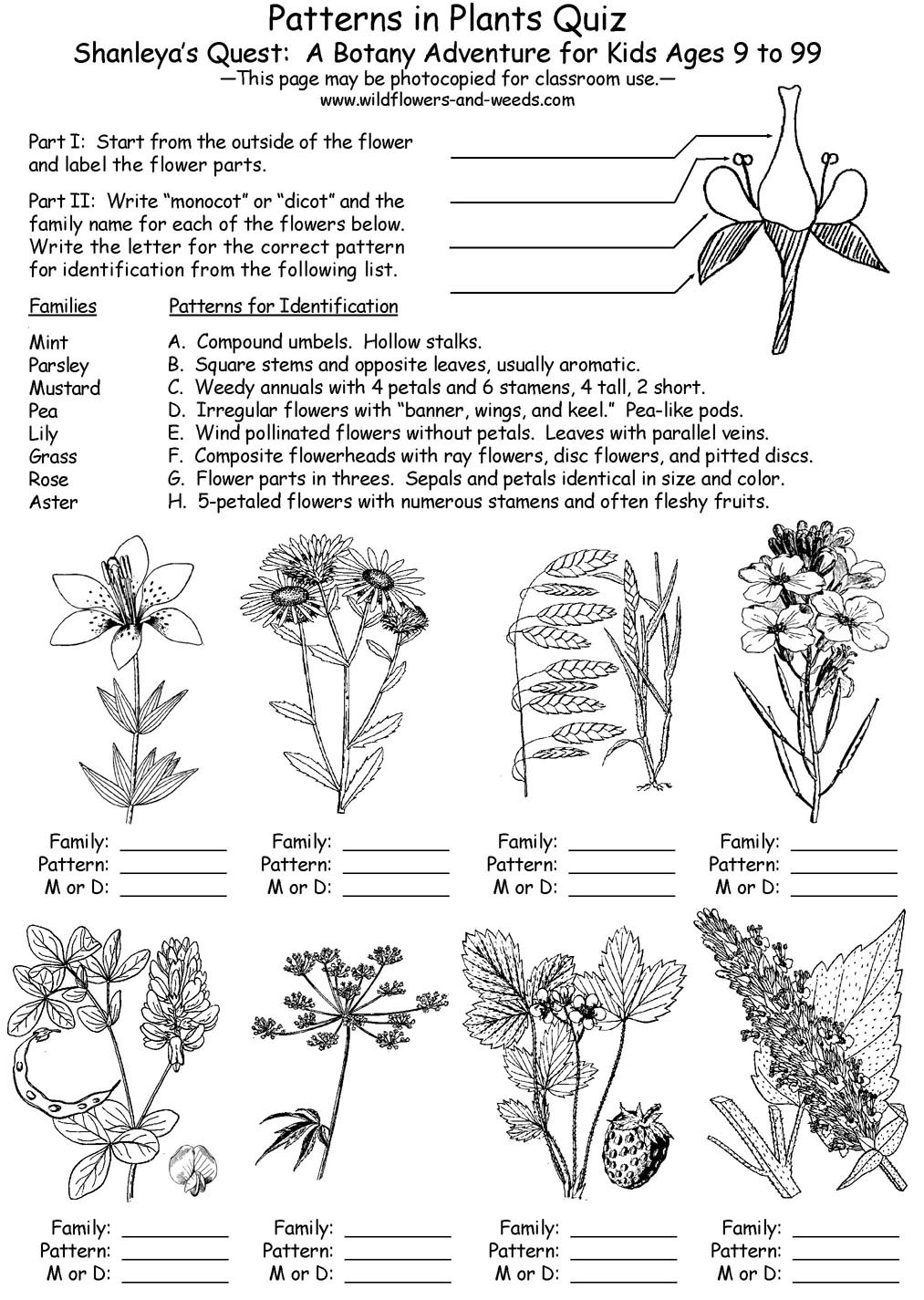 Free Printable Biology Worksheets Lesson Plans Science Biology Botany Patterns In Plants with