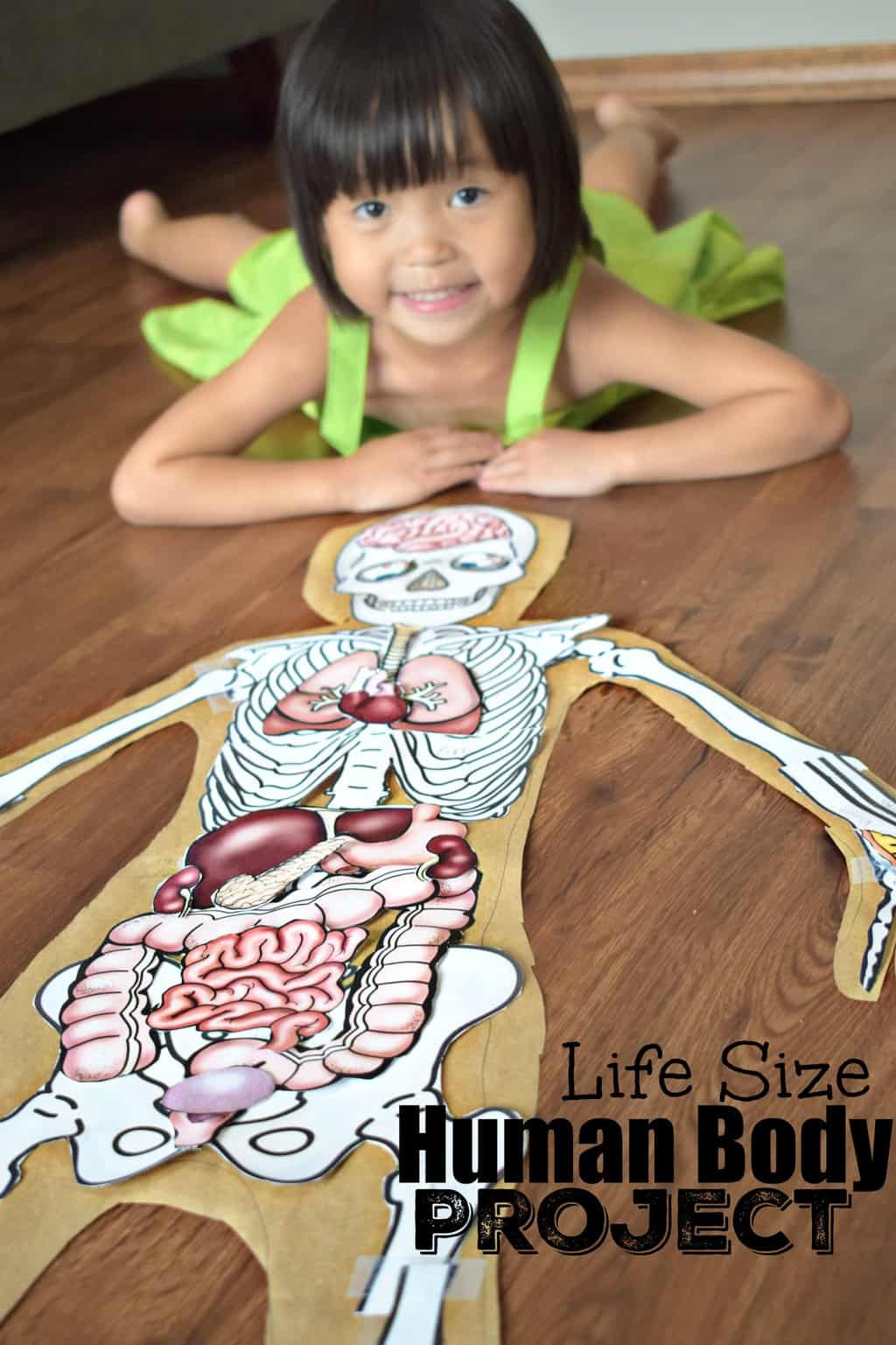 Free Printable Human Anatomy Worksheets Human Body Project with Free Printables