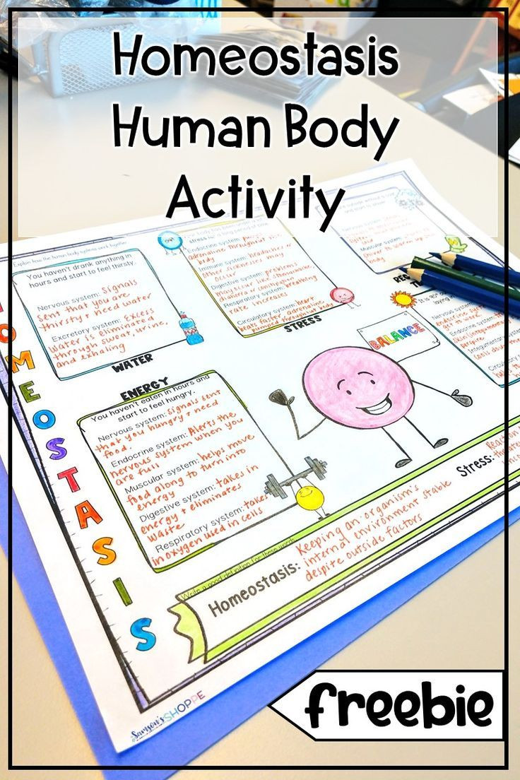Human Body Worksheets Middle School Homeostasis Free Human Body Worksheets and Sketch Note