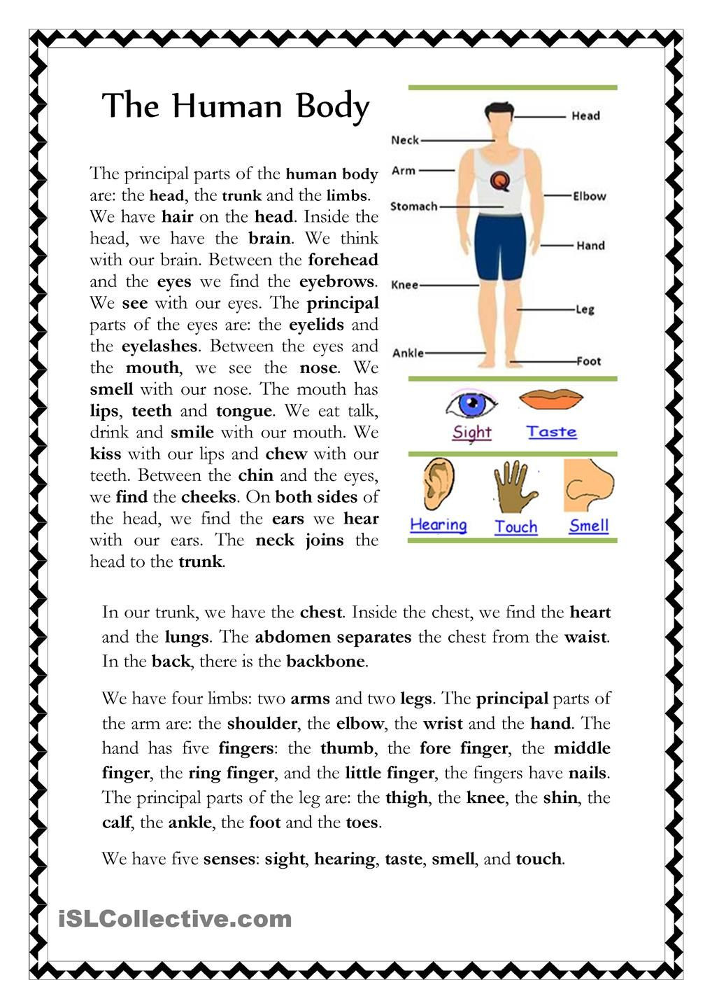 Human Body Worksheets Middle School the Human Body Worksheets Vocabulary Prehension Geometric