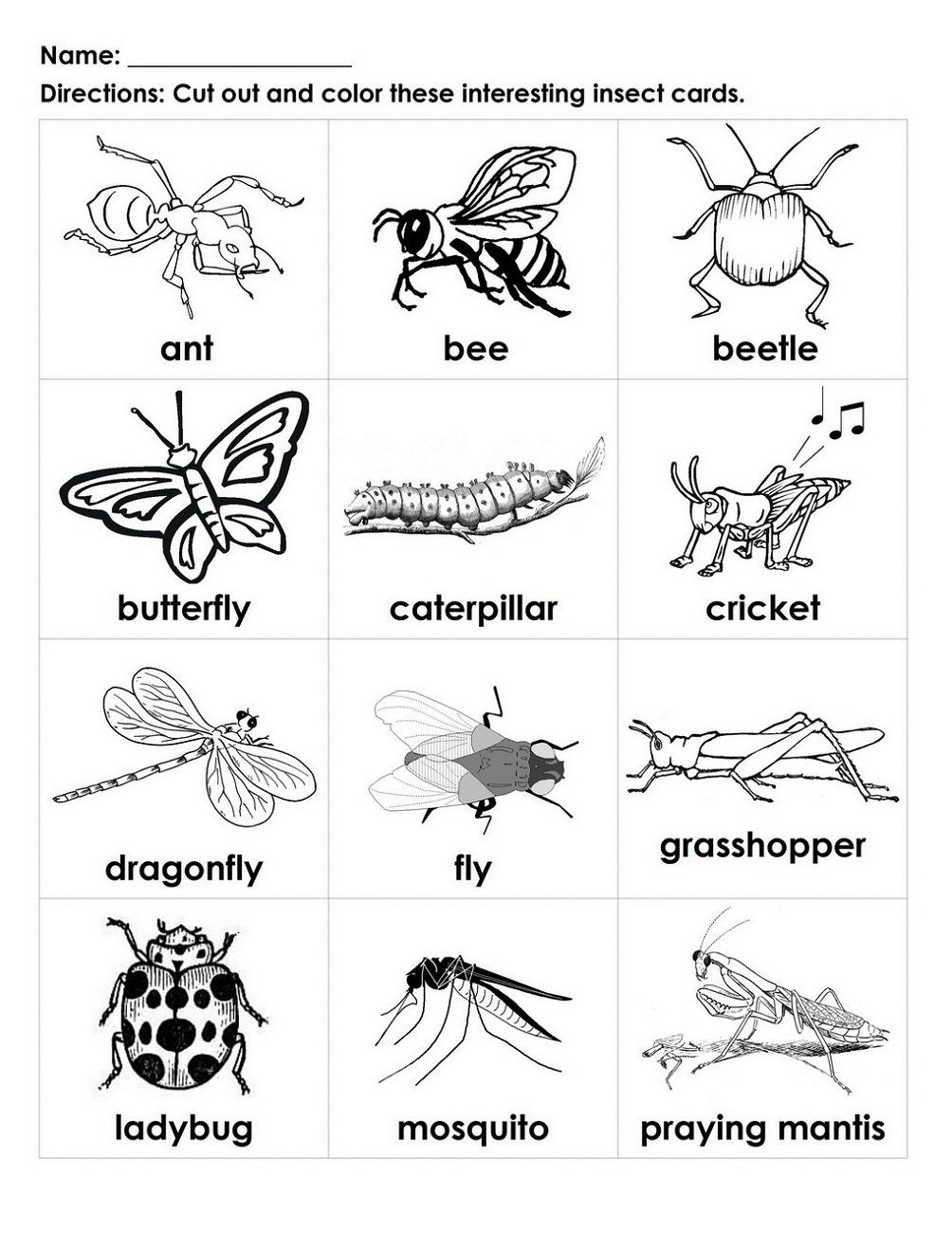Insect Worksheets for Preschoolers Free Handouts for Learning with Images
