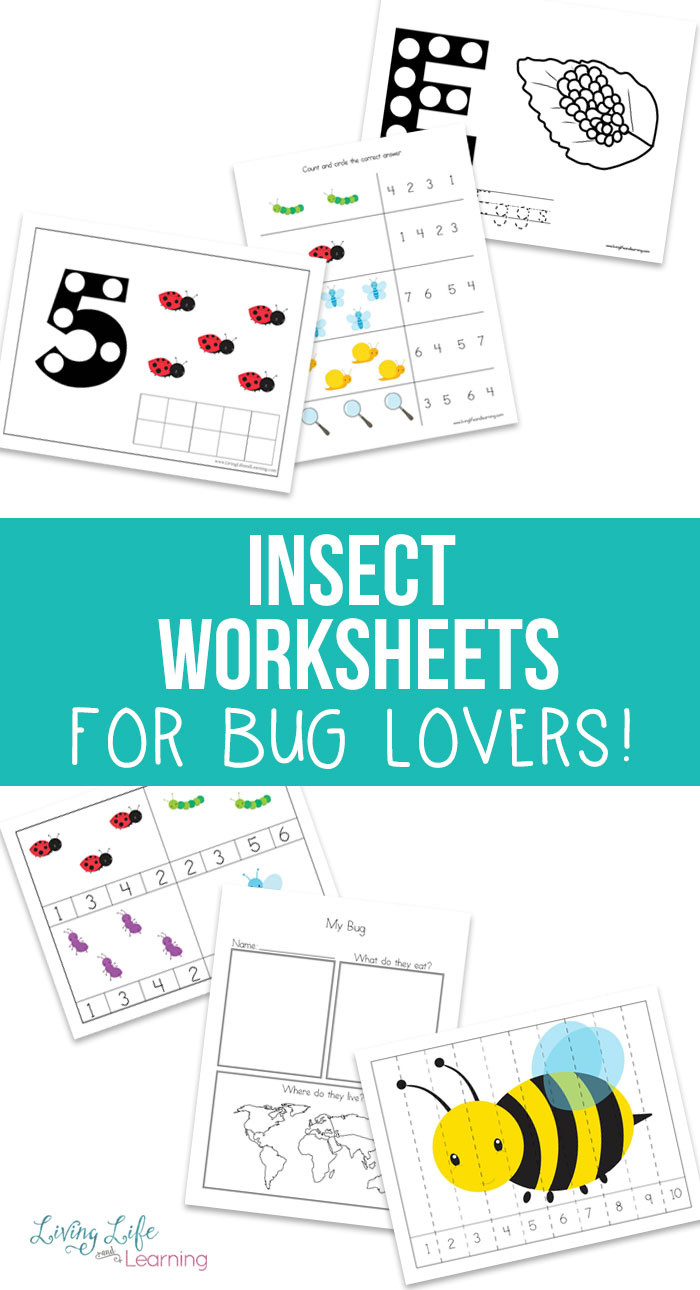 Insect Worksheets for Preschoolers Free Insect Worksheets for Kids