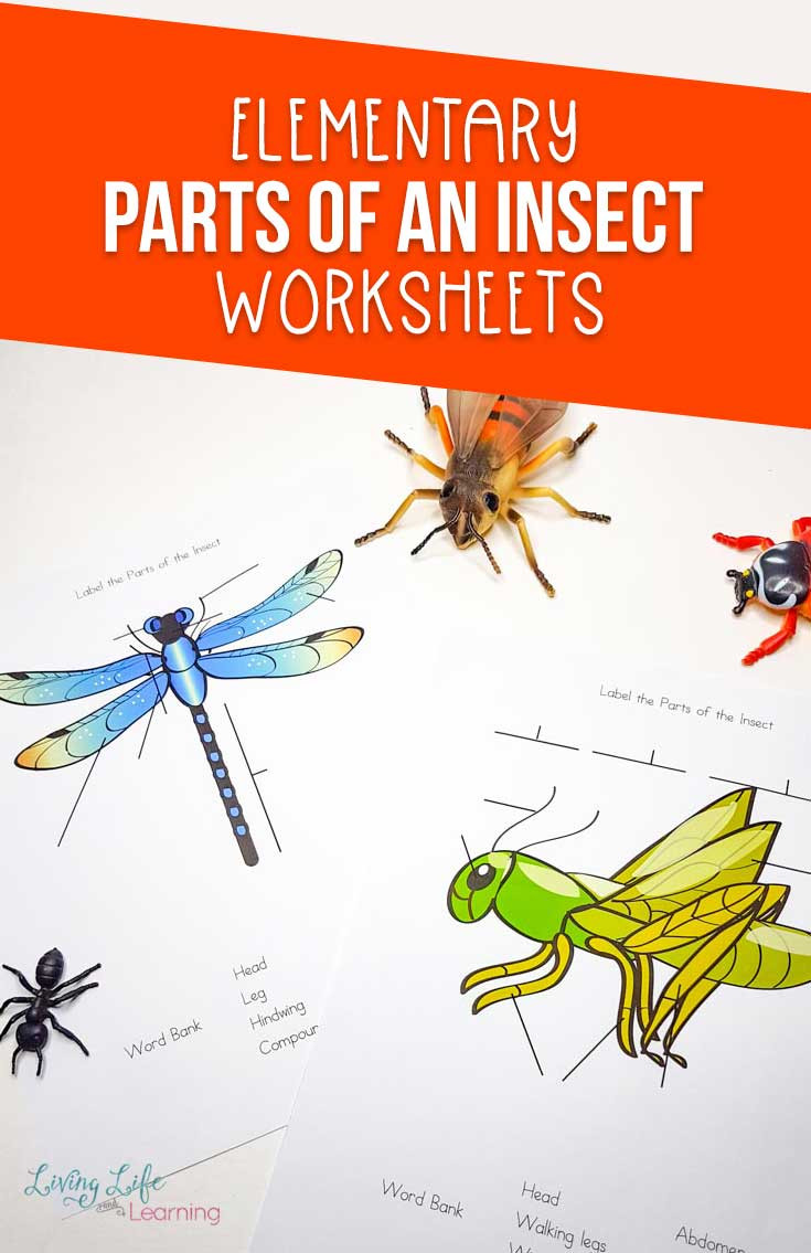 Insect Worksheets for Preschoolers Parts Of An Insect Worksheet