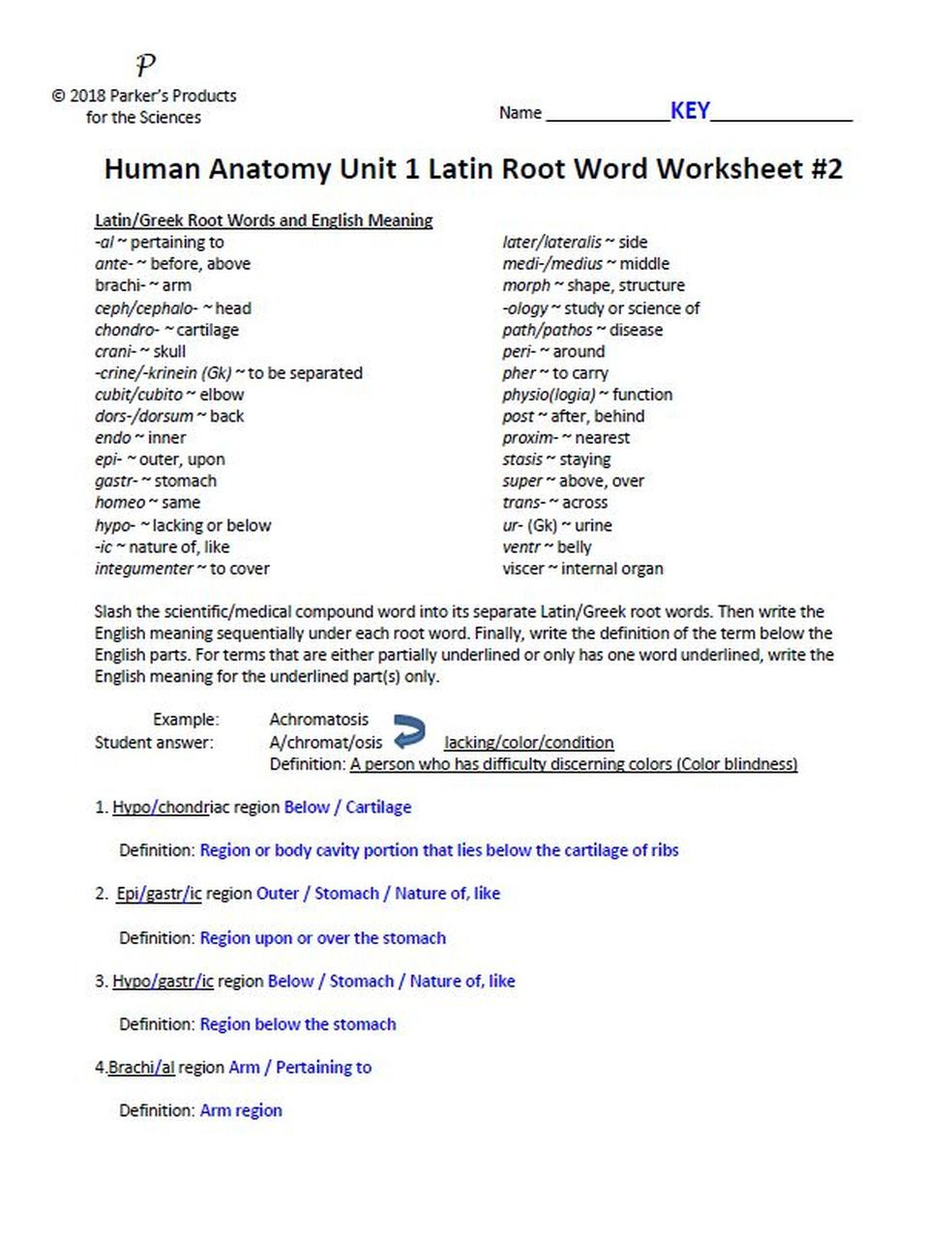 Root Words Worksheets 4th Grade Latin Root Word Worksheet Set for Unit E Human Anatomy & Physiology