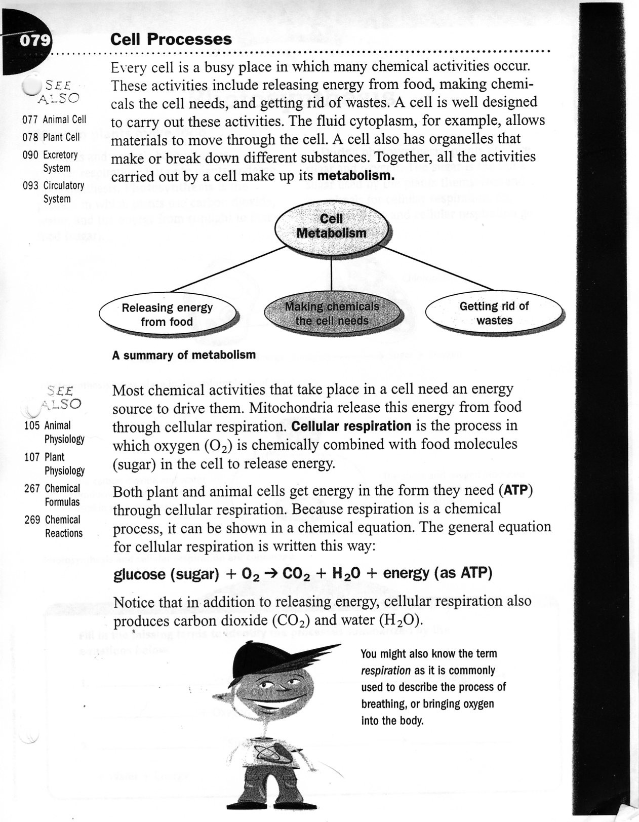 Summary Worksheets Middle School Life Science Easy Worksheets Middle School Cellprocessesws