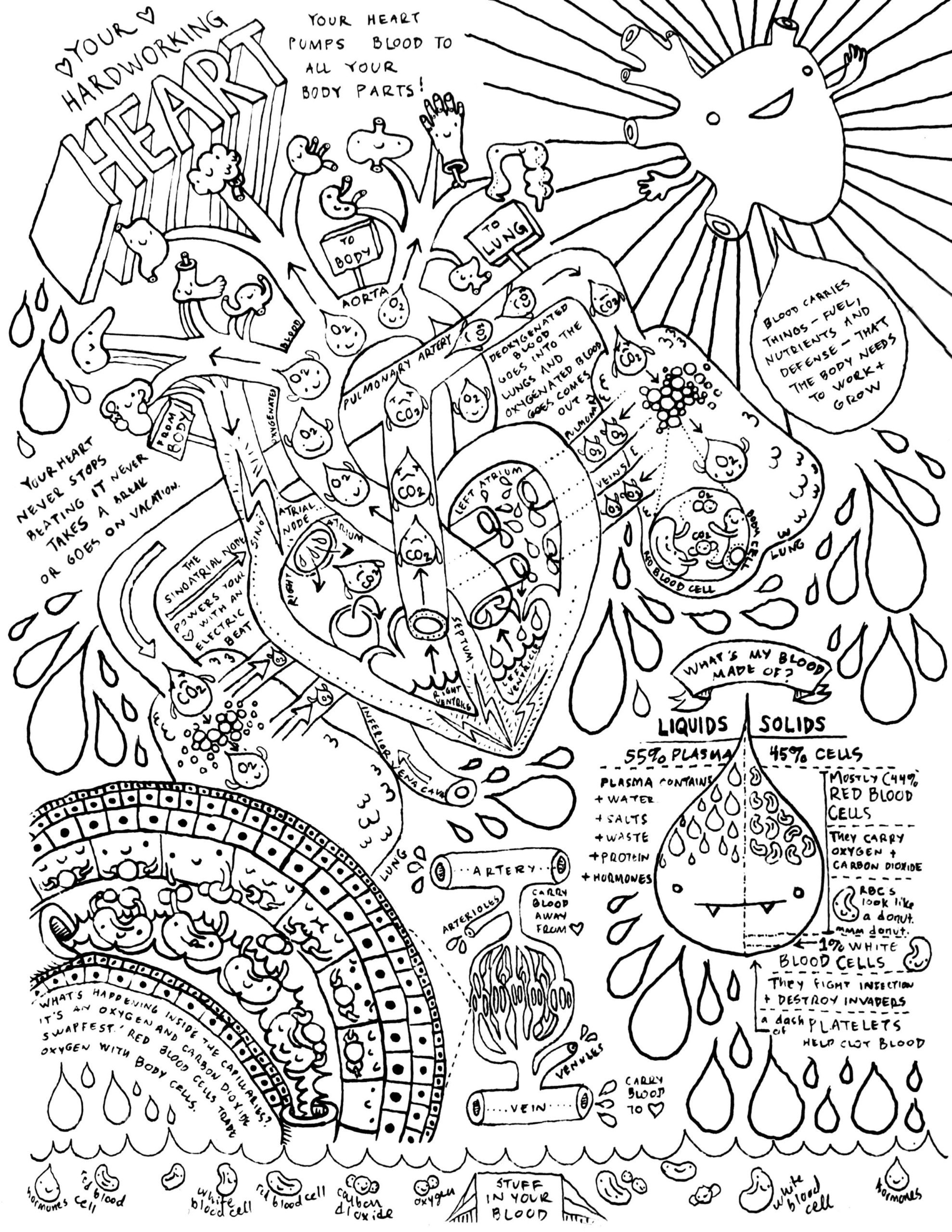 7th Grade Life Science Worksheets Heart and Circulatory System Coloring Anatomy Book Life