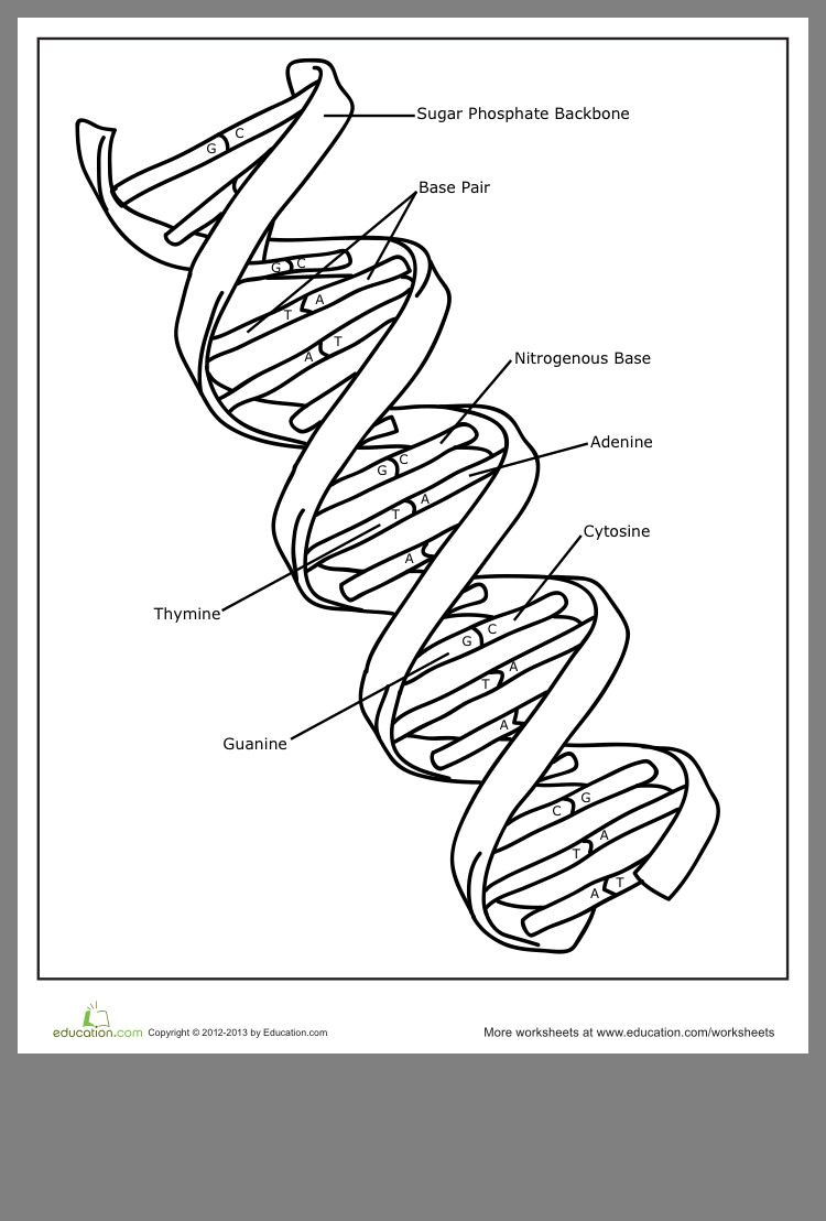 Dna Structure Worksheet High School Pin by Anca On Biology