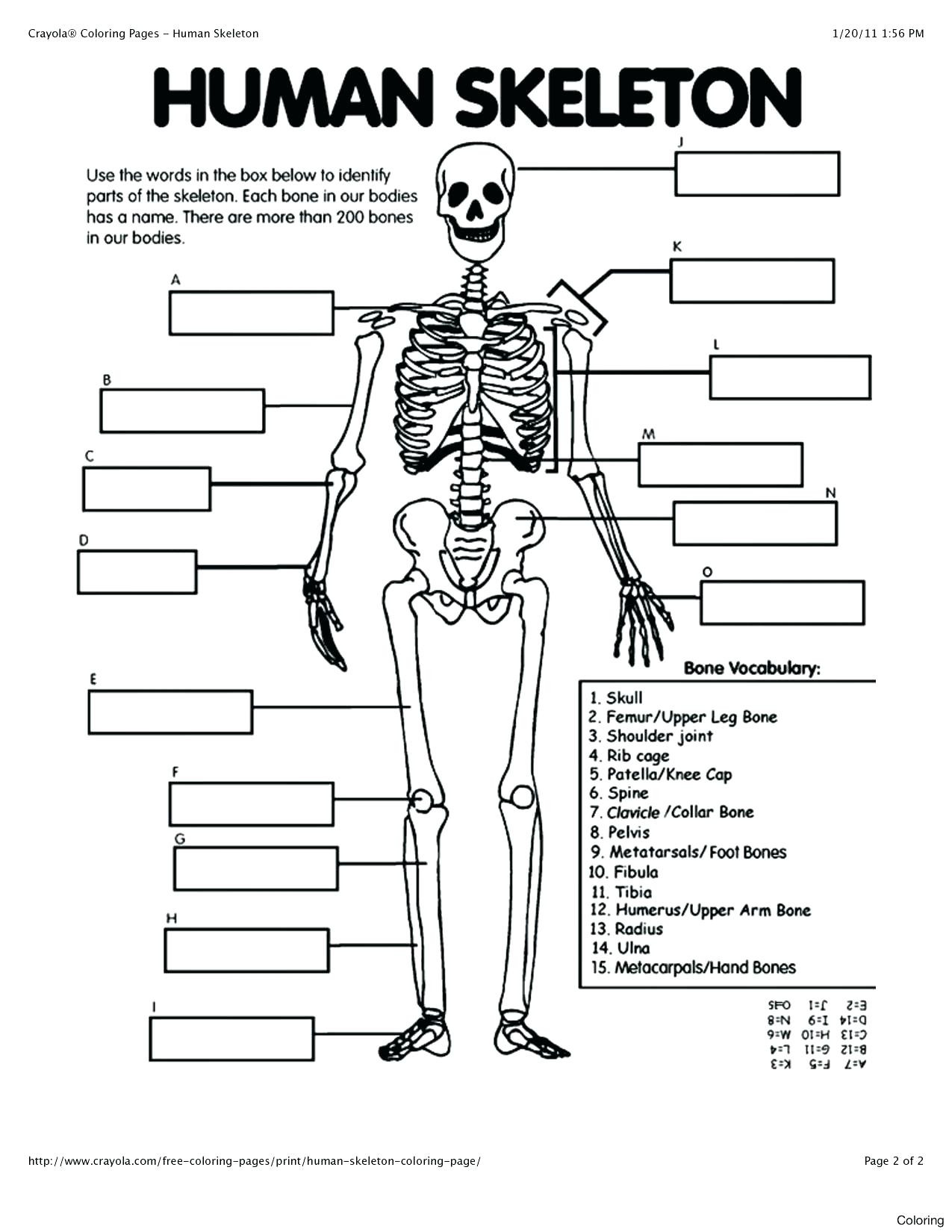free printable anatomy coloring pages photo ideas book kids and physiology