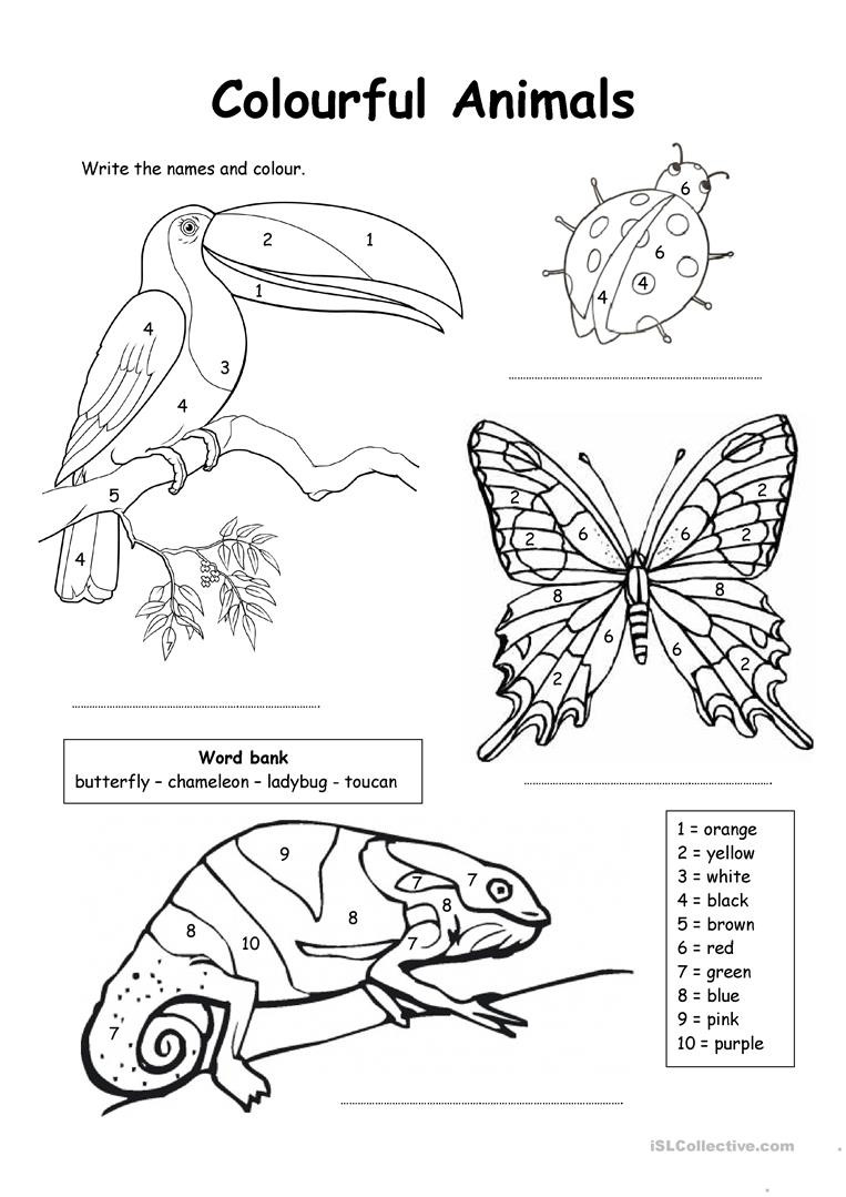 Insect Worksheets for First Grade English Esl Colours Worksheets Most Ed 917 Results