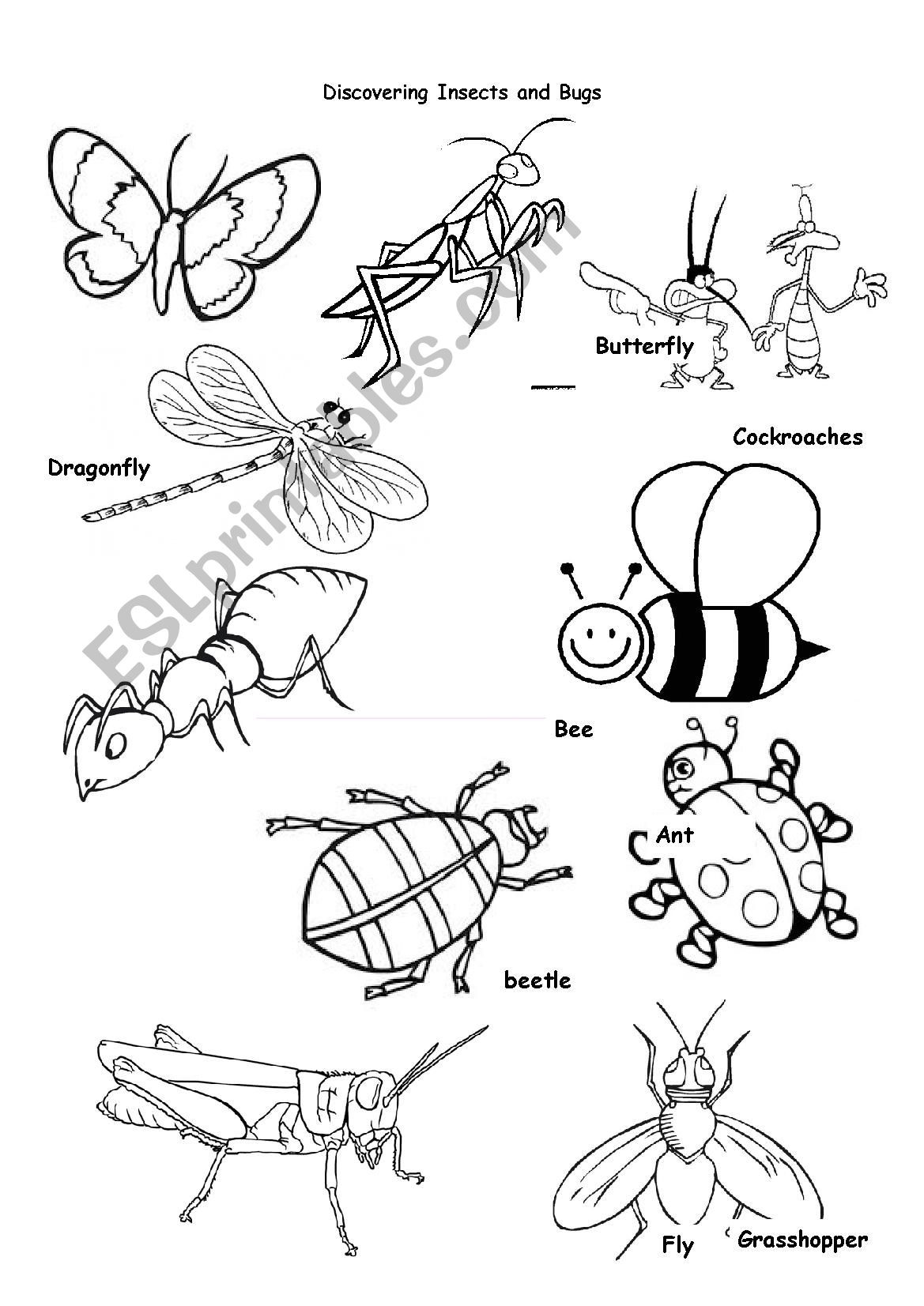 Insect Worksheets for First Grade Insects Animals Worksheet Printable Worksheets and