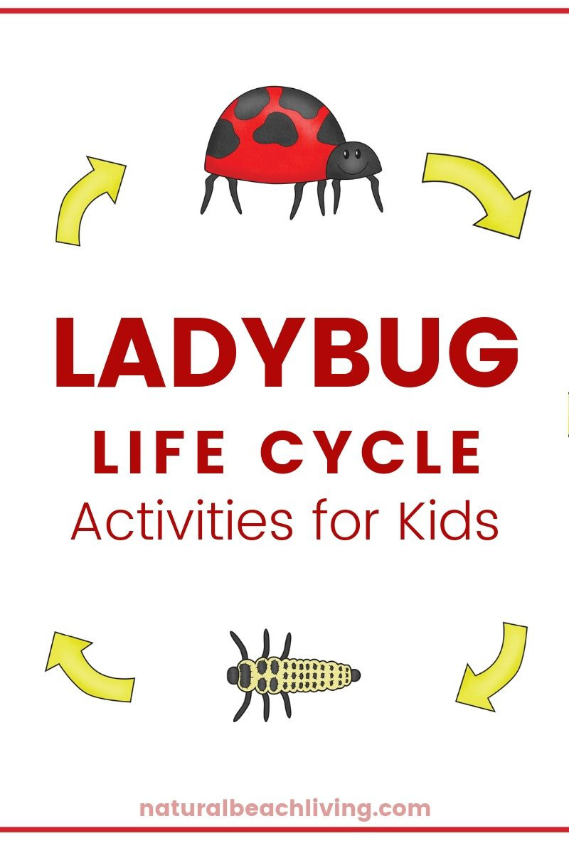 Insect Worksheets for First Grade Ladybug Life Cycle Lesson Plans and Activities Natural
