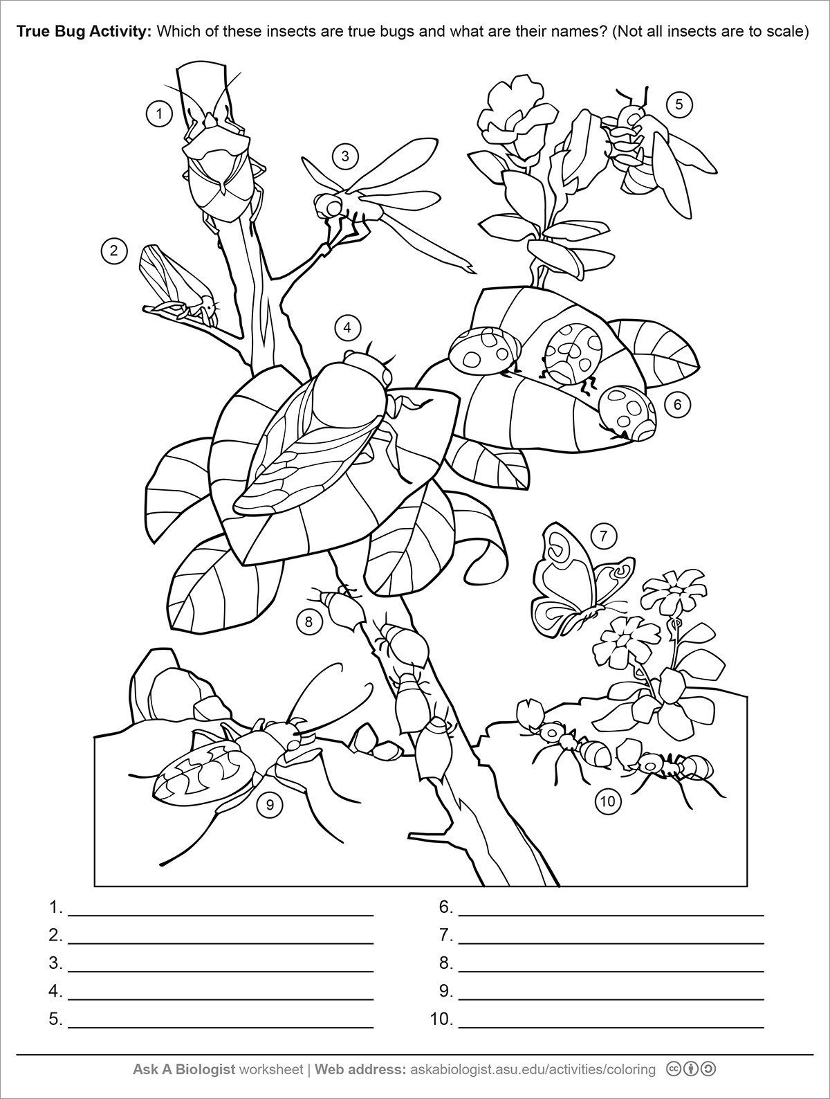 Insect Worksheets for First Grade Preschool Insect Worksheets