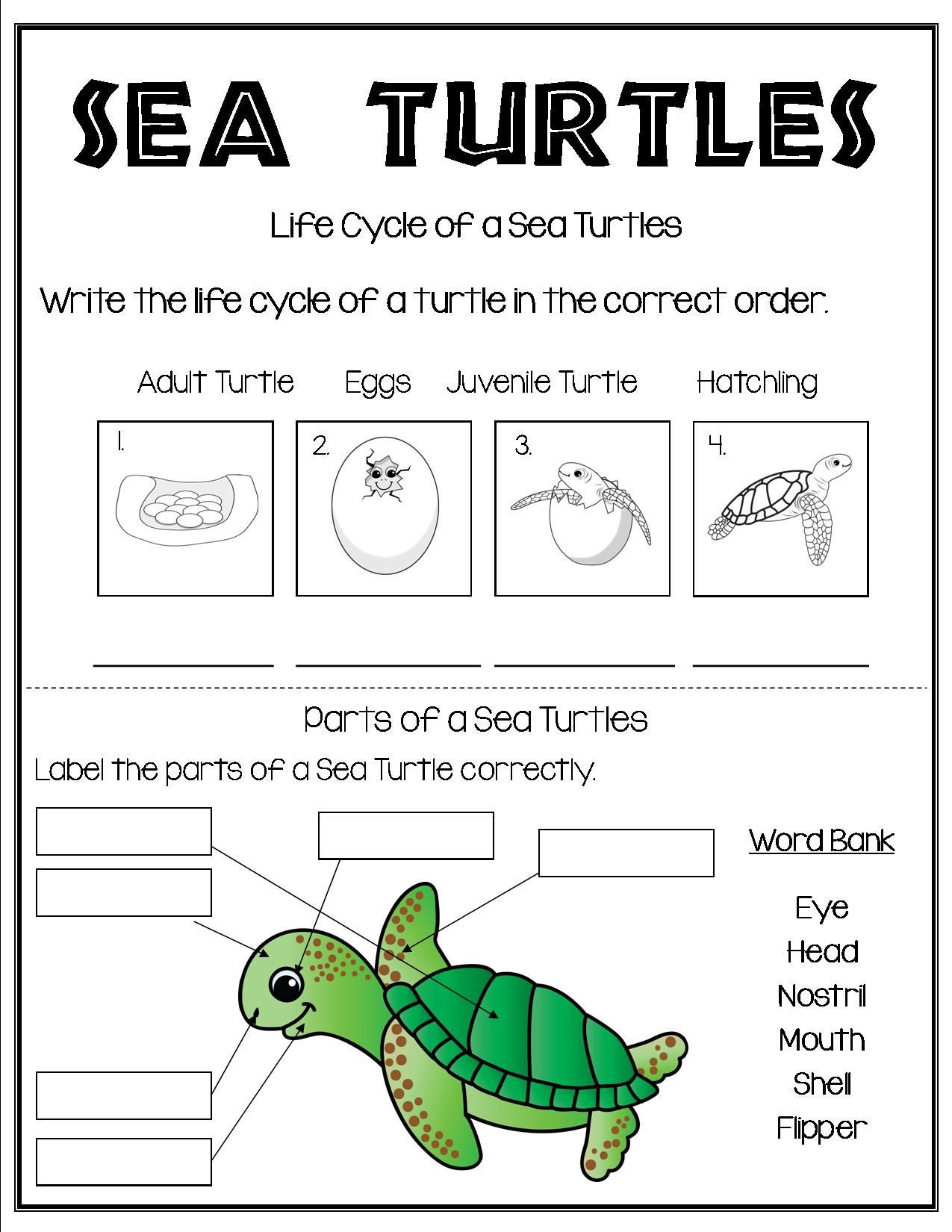 Ocean Worksheets for 2nd Grade Grade 1 and Grade 2 Students Can Learn About Reptiles All