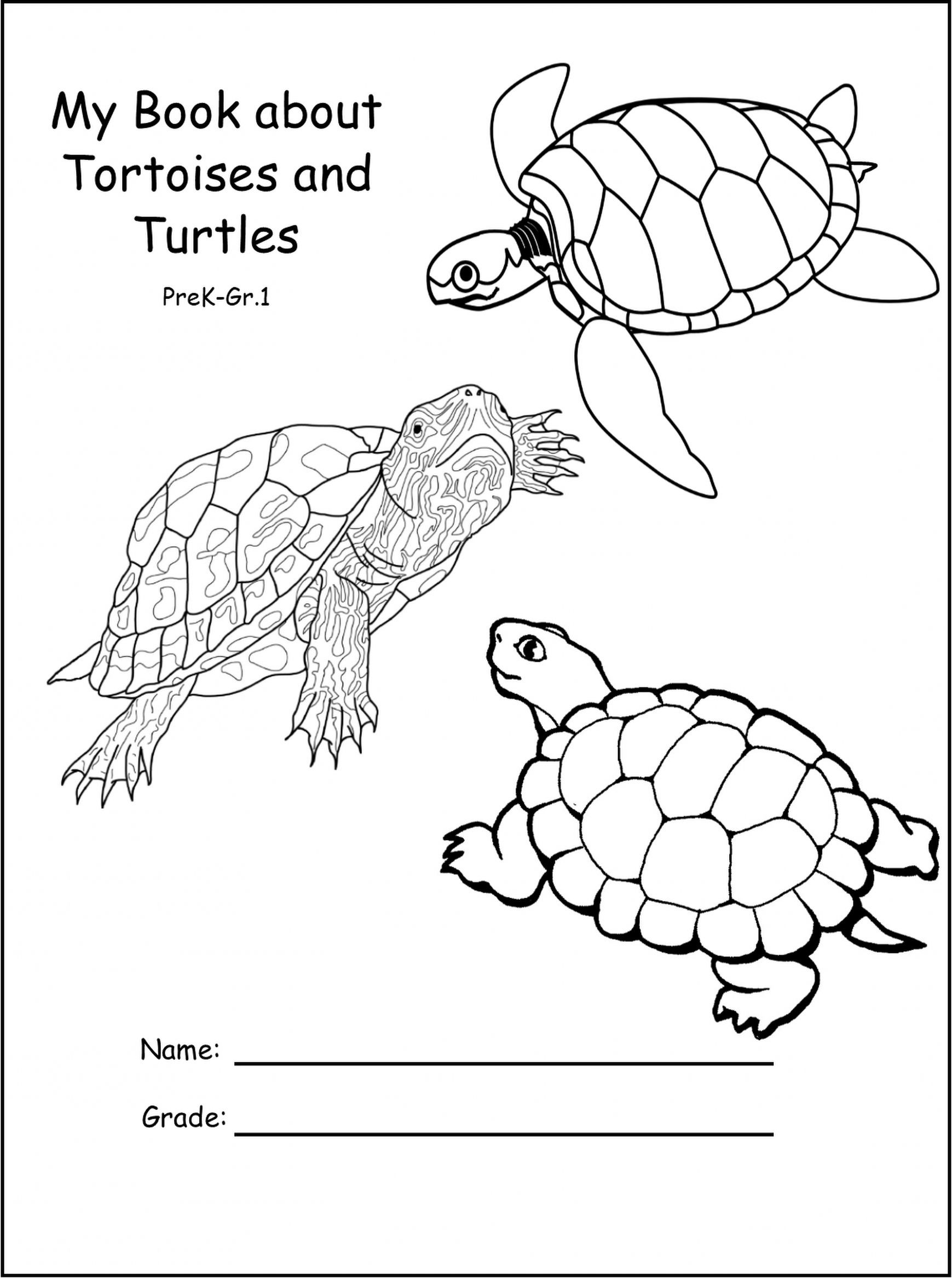 Ocean Worksheets for 2nd Grade New Math for Elementary School Direct Object Worksheets
