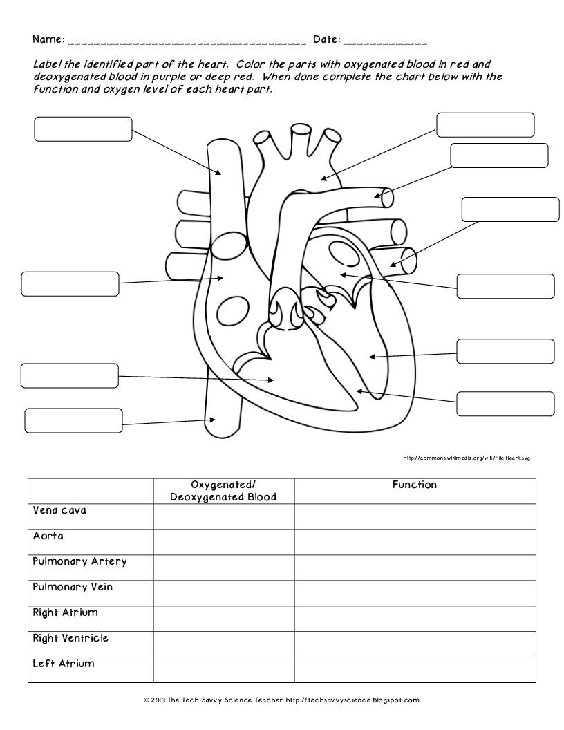Printable Anatomy Labeling Worksheets ปักพินโดย Chonni Wn ใน All About Biology