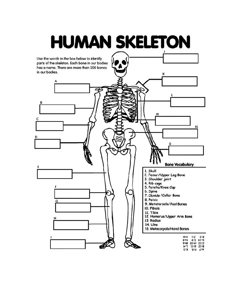 Printable Anatomy Labeling Worksheets Coloring Book Extraordinary Free Printable Anatomy