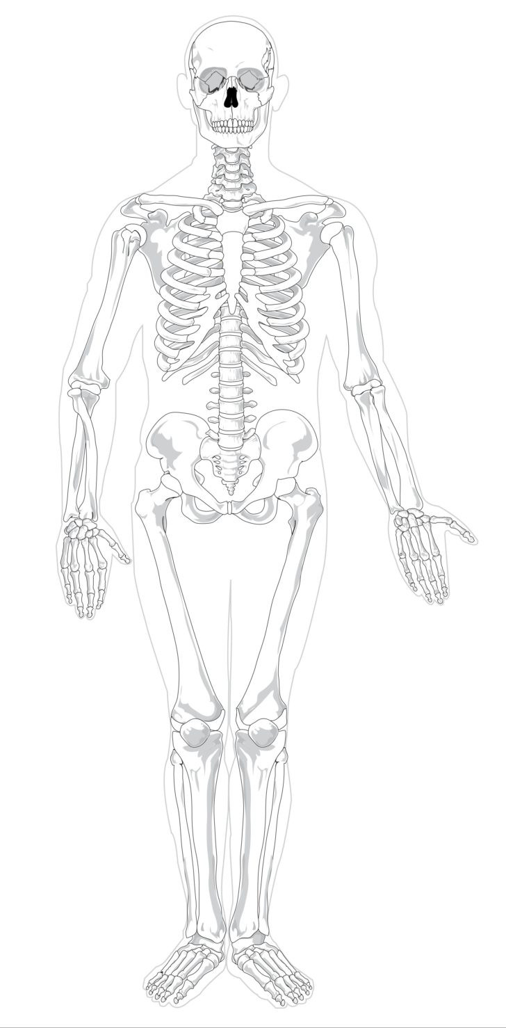 Printable Anatomy Labeling Worksheets Human Skeleton with Labels Printable Anatomy