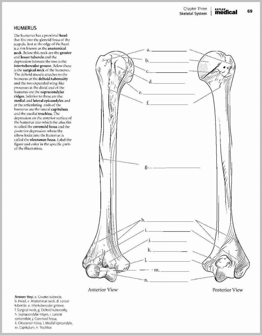 Printable Anatomy Worksheets Anatomy Coloring Book 4th Edition Wynn Kapit Download Answer
