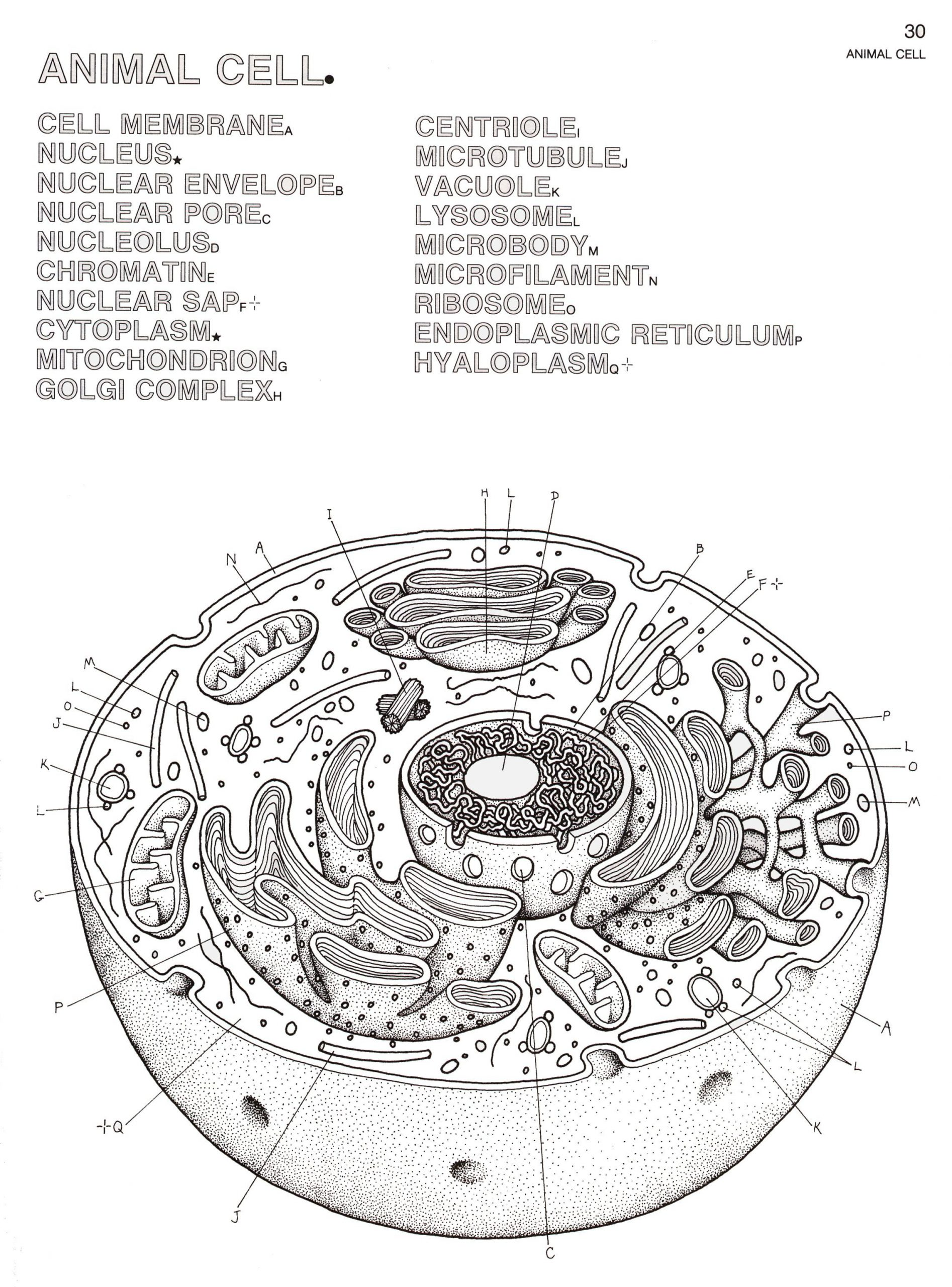 Printable Animal Cell Diagram Biology Coloring Pages Biology Coloring Book 2280—3081