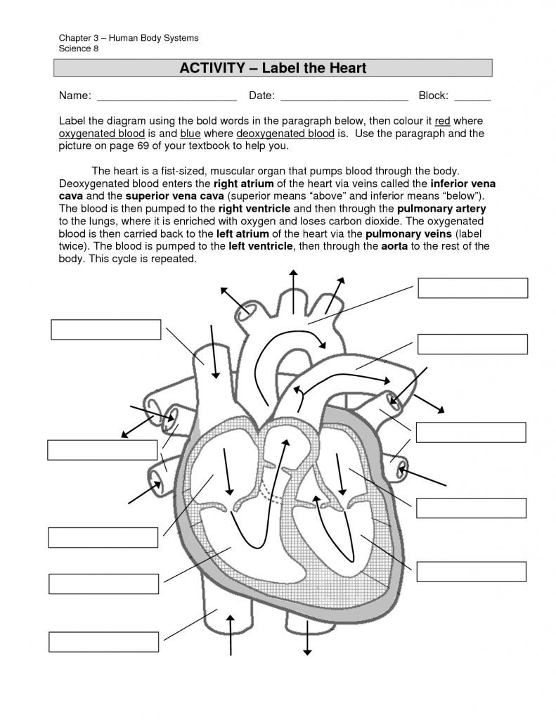 Printable Heart Diagram Simple Labeled Heart for Kids Blue and Red Diagram the