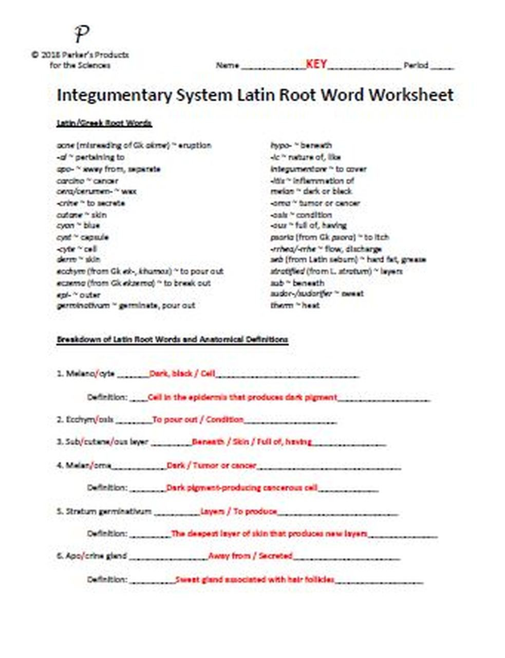 Root Word Worksheets Middle School Integumentary System Latin Root Word Worksheet