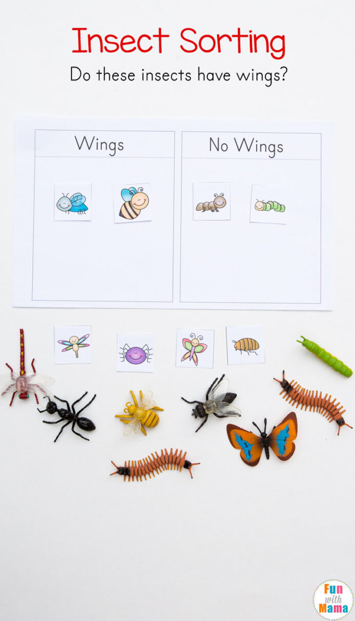 Sorting Worksheets for First Grade Preschool Insect theme sorting Worksheet Bug Activities Fun